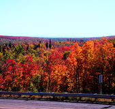 Autumn Roadside Splendor — Stock Photo