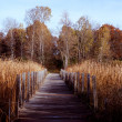 Footbridge Nature Trail - Minnesota — Stock Photo