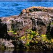 Stock Photo: Lake Superior Rockscape