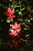 Autumn Leaf Motif — Photo