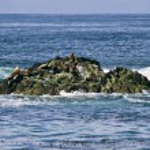 Harbor Seals Atop Rock Formation - California — Stock Photo #47088325