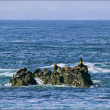 Harbor Seals Resting On Rock Outcrop - California — Stock Photo