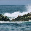 Harbor Seals and Cormorants Atop Wave-Splashed Rocks - California — Stock Photo #47089287