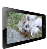 Dog of frame in tablet — Stock Photo