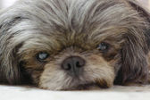 Dog of frame is closeup — Stock Photo