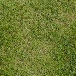 Green grass natural background — Stock Photo