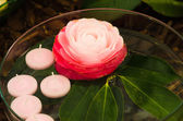 Camellias and candles — Stock Photo
