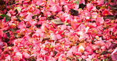 Petals background — Stock Photo