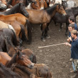 Choosing a horse - Foto Stock