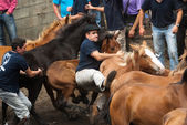 Men and wild horses — Stock Photo