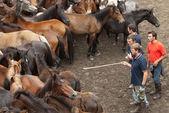 Choosing a horse — Stock Photo