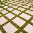 Grid and green — Stock Photo