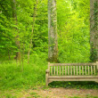 Stock Photo: Forest and bench