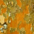 Lichens background — Stock Photo #21132297