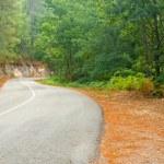Rural road — Stock Photo #22275153