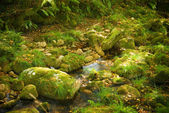 Riverbed — Stock Photo