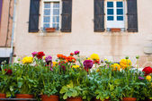 Flowers and windows — Stock Photo