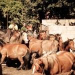Wild horses — Stock Photo #33369383