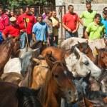 Wild Horses — Stock Photo #33369831