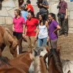 Wild Horses — Stock Photo #33371335