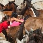 Wild horses — Stock Photo #33372009