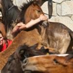 Wild horses — Stock Photo #33372017