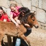 Wild horses — Stock Photo #33372289