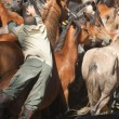 Man an horse — Stock Photo