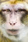 Scimmia — Foto Stock