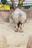 Rinoceronte — Foto de Stock