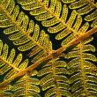 Fern — Stock Photo #36975595