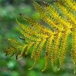 Fern — Stock Photo #36975751