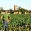 Farmer checks the soybeans — Stock Photo #28768085