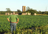 Farmer checks the soybeans — Stock Photo