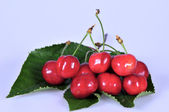 Cherry with leaves — Stock Photo