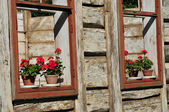 Flowers in the window — Stock Photo