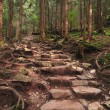 Stock Photo: Forest and forest path
