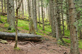 Forest and forest path — Stock Photo