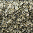 Oyster shell background — Stock Photo