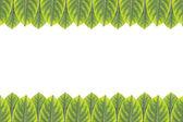 白い背景で隔離の緑の葉のフレーム — ストック写真