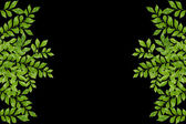 Green leaves frame on black background — Stock Photo