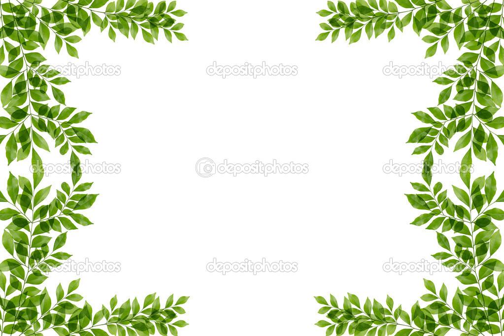 Hojas De Color Verde Marco Aislado Sobre Fondo Blanco