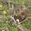 Cute squirrel — Stockfoto