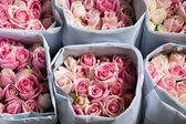 Pink Roses wrapped in paper — Stock Photo