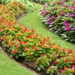 图库照片: Colorful flower garden