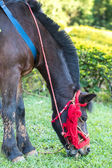 Horse eating a grass — Stock Photo
