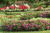 Bloementuin met kleurrijke — Stockfoto