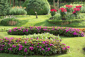 Flower garden with colorful — Stock Photo