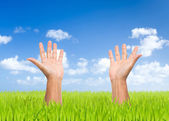 Two open hand with green field and blue sky background — Stock Photo