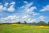 Yellow flower fields with blue sky background — Stock Photo